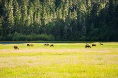 Potatso nationalpark, Shangri-La Fotografering för Bildbyråer