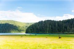 Potatso nationalpark, Shangri-La Arkivbild