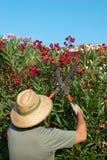 Potatura del giardiniere Immagine Stock Libera da Diritti