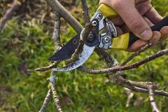 Potatura dell'albero Fotografia Stock Libera da Diritti