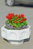 Pote blanco de la calle de flores Fotos de archivo libres de regalías