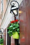 Pote con las flores rojas en la calle Imagen de archivo libre de regalías