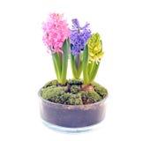 Pote con los jacintos Imagen de archivo libre de regalías