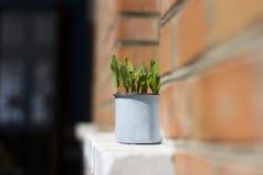 Pote con una planta Fotos de archivo libres de regalías