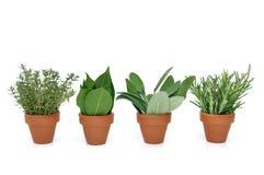 Pote de diversas hierbas Fotografía de archivo libre de regalías