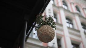 Pote de flores en el fondo de la casa en Riga metrajes