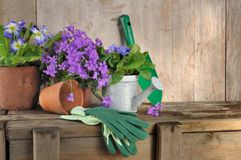 Pote de flores y herramientas que cultivan un huerto Imágenes de archivo libres de regalías