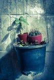 Pote de la ejecución con el pequeño cactus Foto de archivo libre de regalías