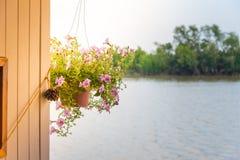Pote de la flor Foto de archivo libre de regalías