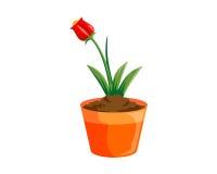Pote de la flora Imagen de archivo libre de regalías