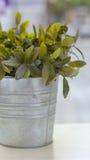 Pote de la planta Fotografía de archivo libre de regalías