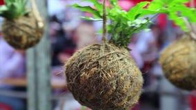 Pote de la planta del coco del diseño floral del concepto almacen de video
