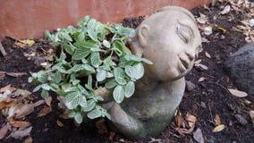 Pote de la planta en jardín Foto de archivo