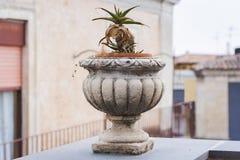 Pote de piedra decorativo para las plantas en la terraza de un edificio histórico en Catania, Sicilia, Italia imágenes de archivo libres de regalías