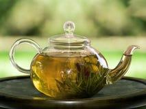 Pote de té con el jazmín Foto de archivo