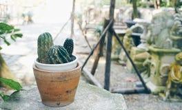 Pote del árbol del cactus en jardín Fotos de archivo libres de regalías