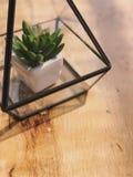 Pote del cactus en vidrio en la tabla de madera Imagen de archivo libre de regalías