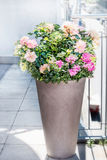 Pote hermoso del patio con arreglos florales: rosas, petunias y flores de las verbenas en balcón o terraza Plantador urbano del e fotografía de archivo libre de regalías