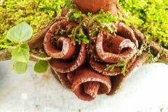 pote y planta Imagen de archivo libre de regalías