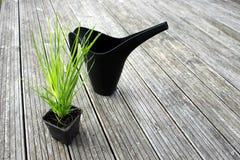 Pote y regadera de la hierba Imagen de archivo