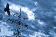 Poteau électrique avec le corbeau photo libre de droits