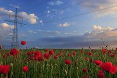 Poteau électrique dans le domaine de pavot Photo libre de droits