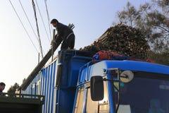 Poteau en bambou de mouvement de travailleur sur le camion Photo libre de droits