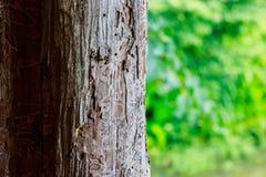 Poteau en bois Photo libre de droits