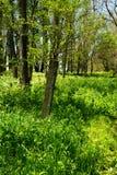 Poteau en bois dans les bois photo stock
