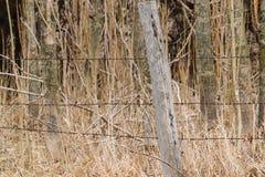 Poteau en bois de barrière devant la forêt photographie stock