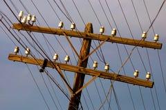 Poteau en bois de l'électricité Images libres de droits