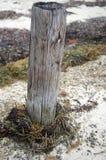 Poteau en bois sur la plage photos stock