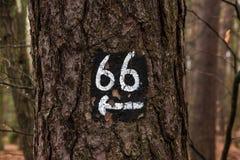 Poteau indicateur de direction d'arbre Photo stock