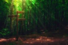 Poteau indicateur en bois dans la forêt images stock