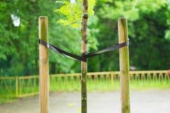 Poteaux en bois attachés par arbre Photographie stock