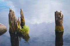 Poteaux en bois dans l'eau Photo libre de droits