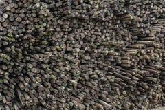 Poteaux imbibés en bois en faveur de culture intensive de fruit image libre de droits