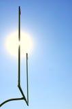 Poteaux sur la zone de football américain images libres de droits