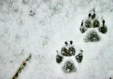 Poten in de Sneeuw Stock Foto