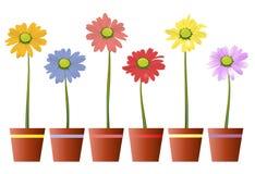 Potenciômetro da flor da margarida Imagem de Stock Royalty Free