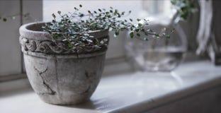 Potenciômetro de argila com plantas vivas fotos de stock