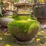 Potenciômetro de argila com verde Foto de Stock Royalty Free