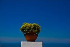 Potenciômetro de flor Imagens de Stock Royalty Free
