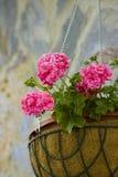 Potenciômetro de flor Fotografia de Stock
