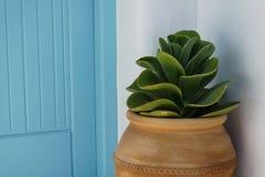 Potenciômetro de flor bonito decorativo imagens de stock