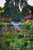 Potenciômetro de flor cerâmico cercado por plantas das rosas no parque das rosas, Timisoara Imagens de Stock