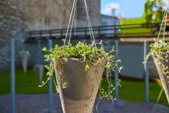 Potenciômetro de flor com planta Imagens de Stock Royalty Free