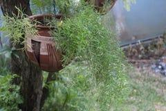 Potenciômetro de flor da argila com bambu como a orquídea fotos de stock royalty free