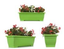 Potenciômetro de flor do jardim com a planta do petúnia isolada no branco, multipl fotos de stock royalty free