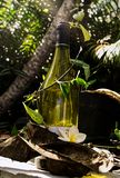 Potenciômetro de flor na garrafa de vinho reciclada fotos de stock